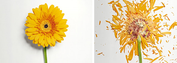 Shattered Flowers, a Flower Photo Shoot by Jon Shireman