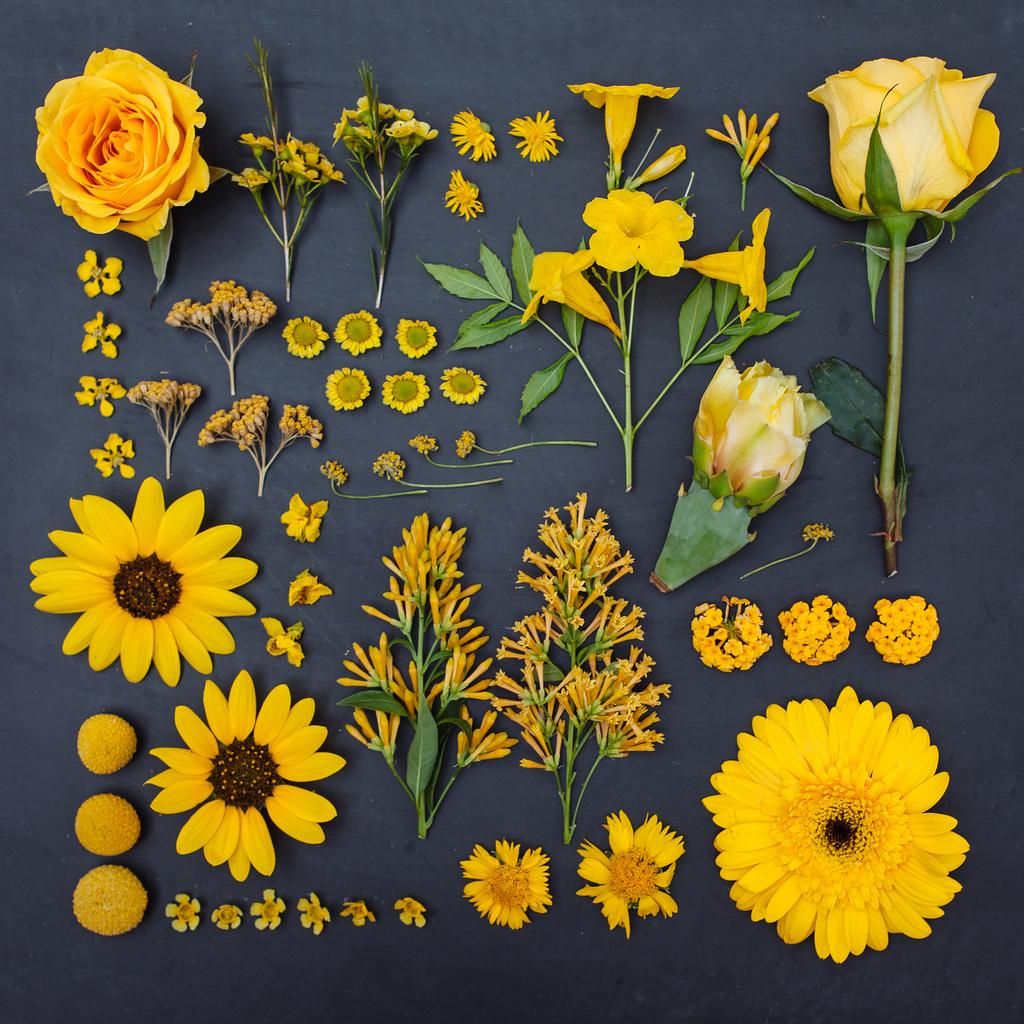 everythingwithatwist-blincoe-flower-04