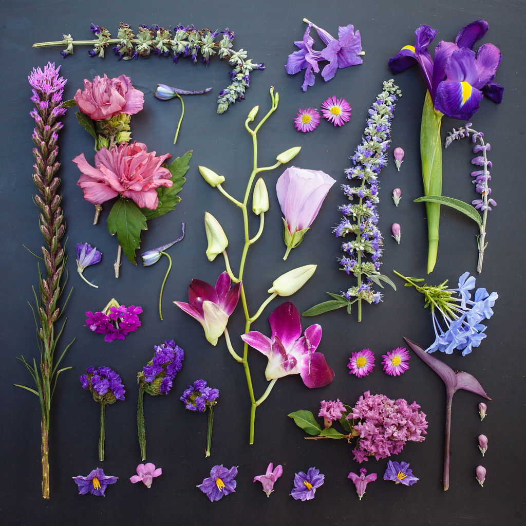 everythingwithatwist-blincoe-flower-07