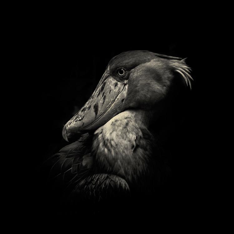 animal photography everythingwithatwist