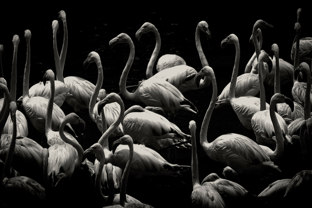 animal-photography-everythingwithatwist-07