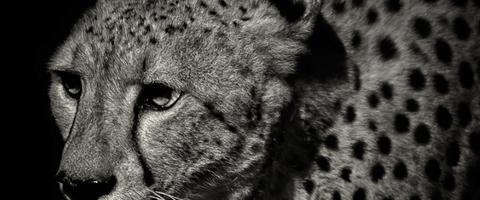 Wild Animal Photography by Alex Stephen Teuscher
