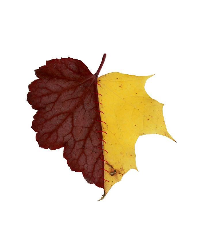 autumn-chimera-everythingwithatwist-03