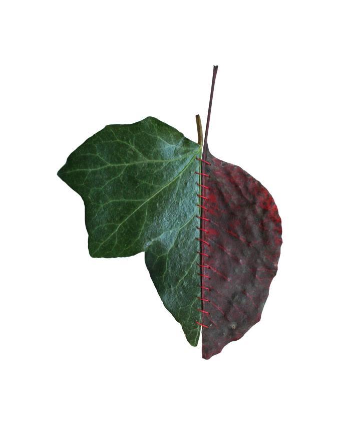 autumn-chimera-everythingwithatwist-04