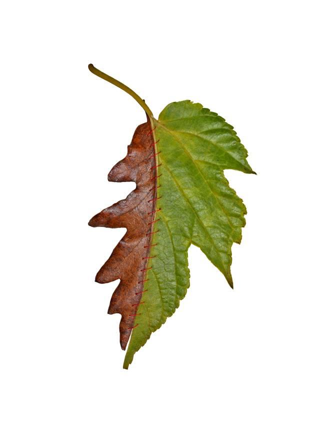 autumn-chimera-everythingwithatwist-05