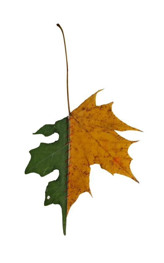 autumn-chimera-everythingwithatwist-08