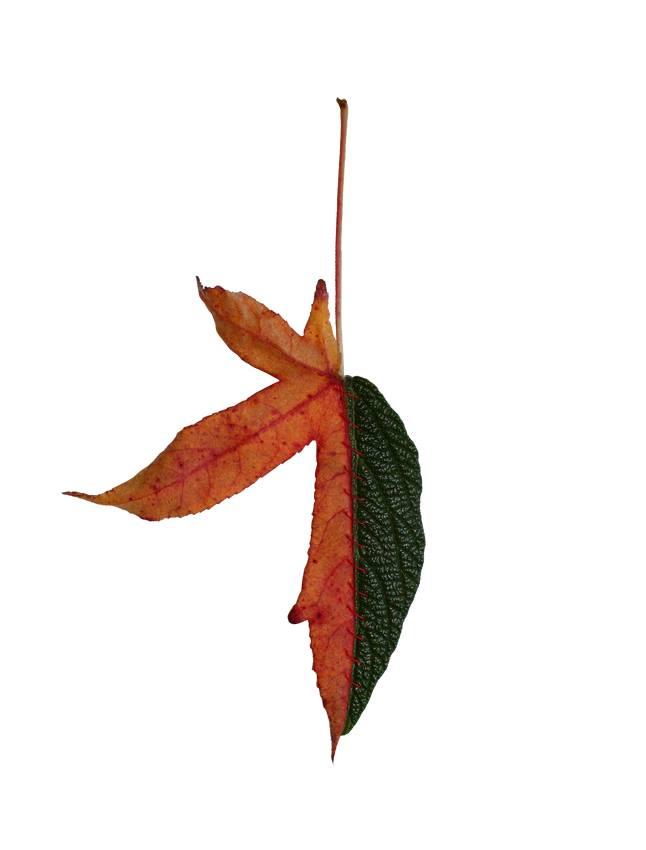 autumn-chimera-everythingwithatwist-10