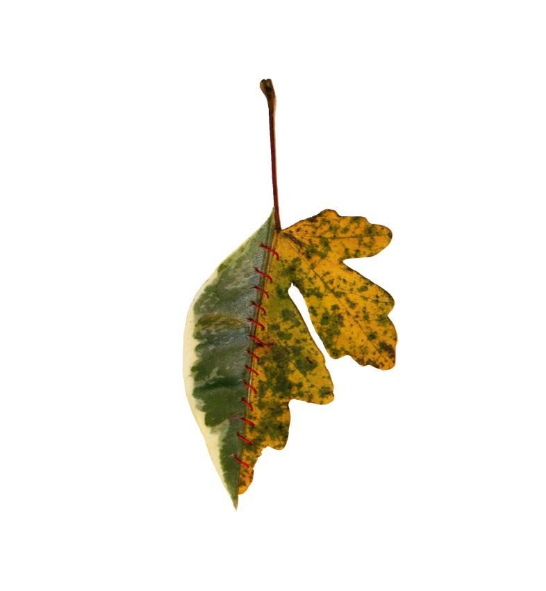 autumn-chimera-everythingwithatwist-11