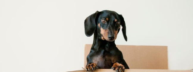 How to Design a Pet-Friendly House
